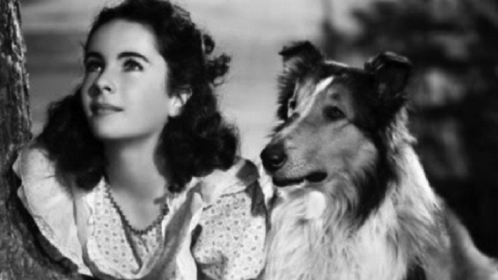 """""""Lassie come home"""" cu Elizabeth Taylor"""