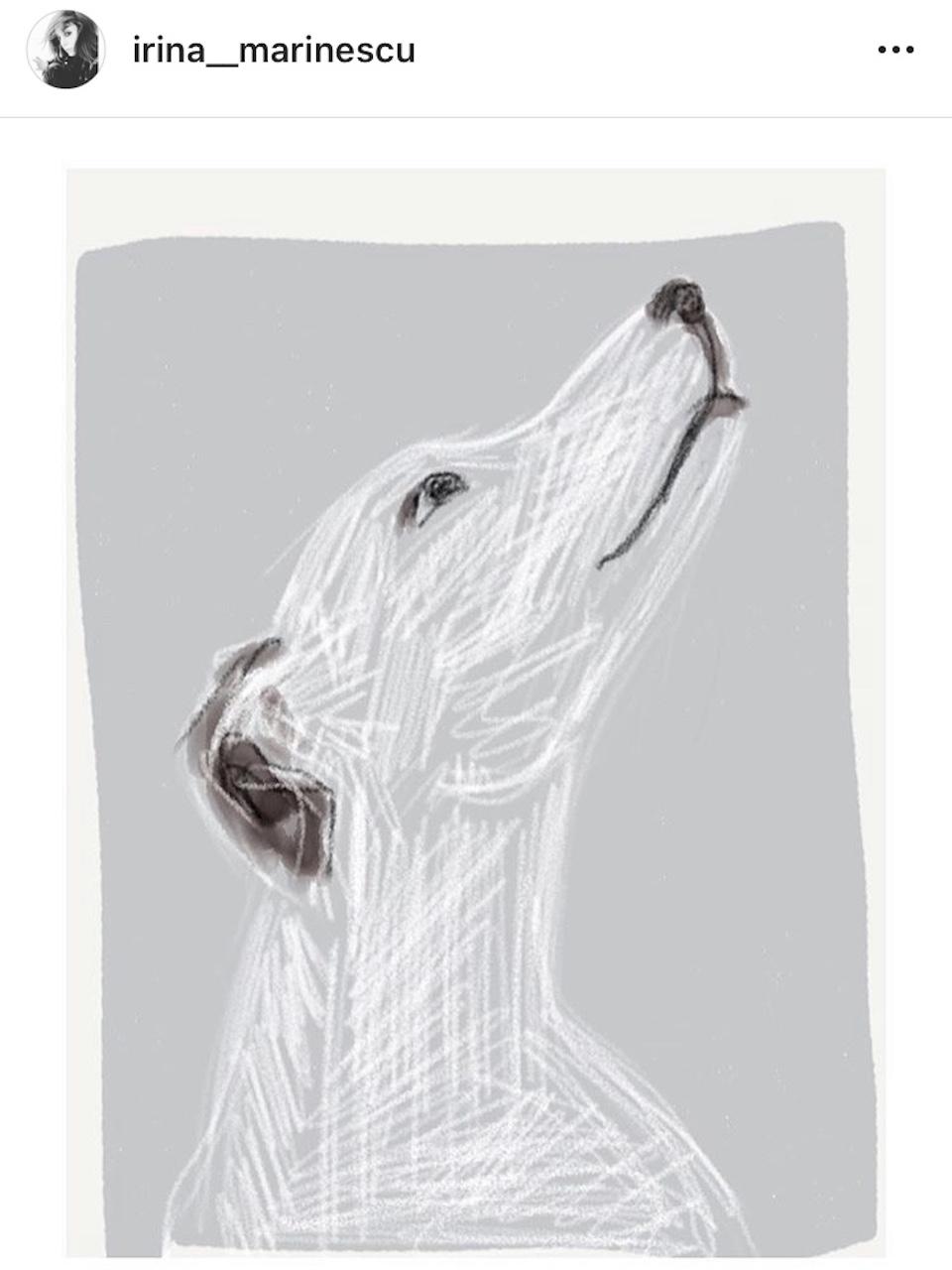 sketch catel, unicat, Irina Marinescu