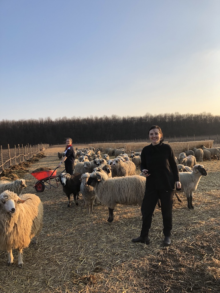 Ioana Vasile si Alexandra, sora ei cea minunata, in vizita la oile salvate din tragedia de la Midia, din 2019