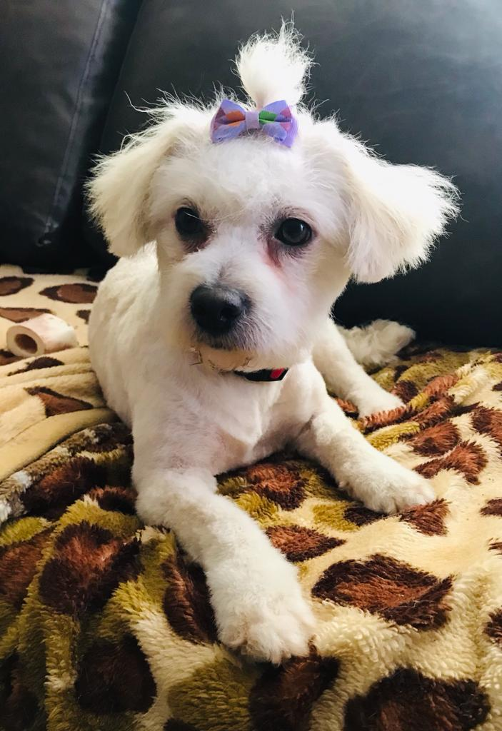 Baffy, adoptata in martie 2021