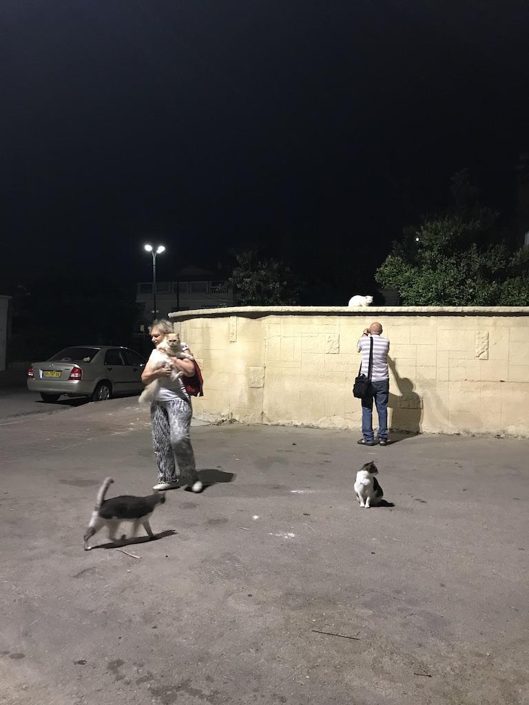 Mama si Dan, intampinati de cateva pisici seara, in parcare