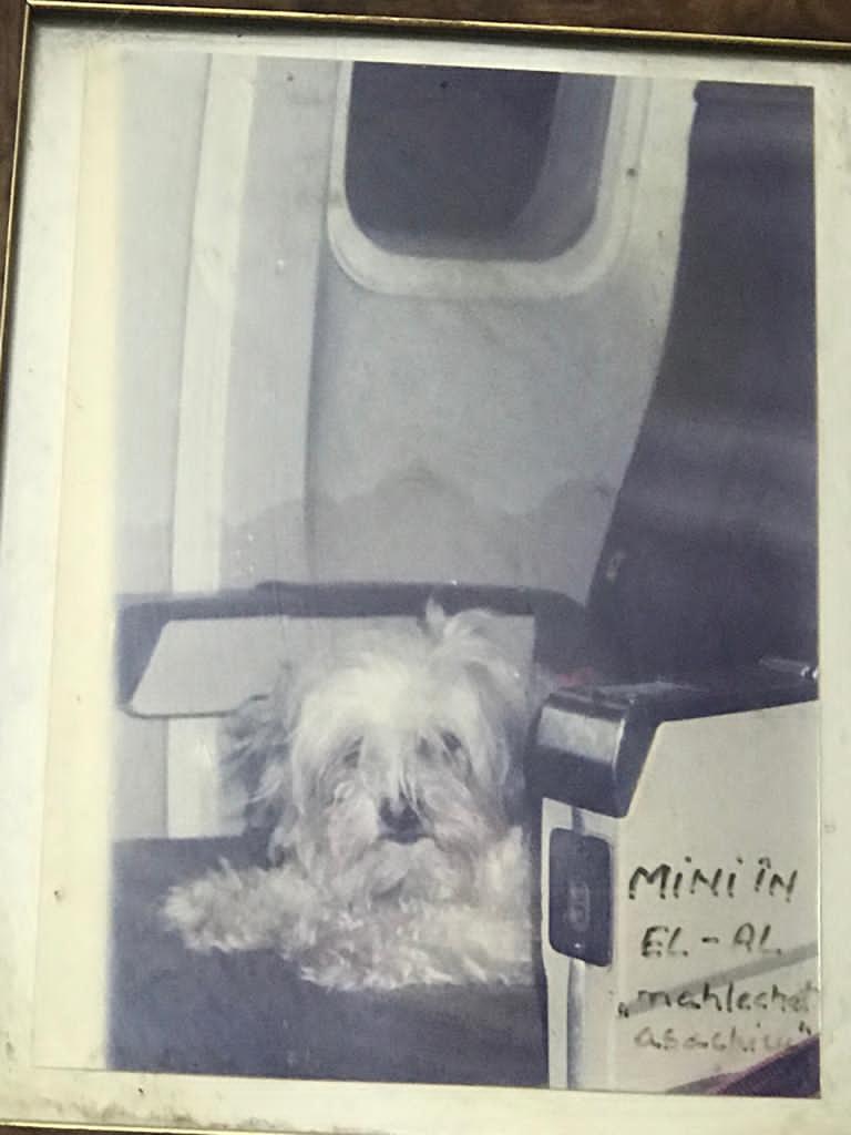Mini, calatoare cu avionul